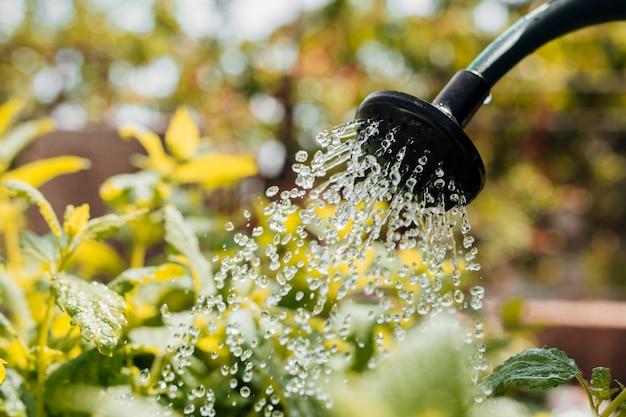 Blumen gießen hautnah Kostenlose Fotos
