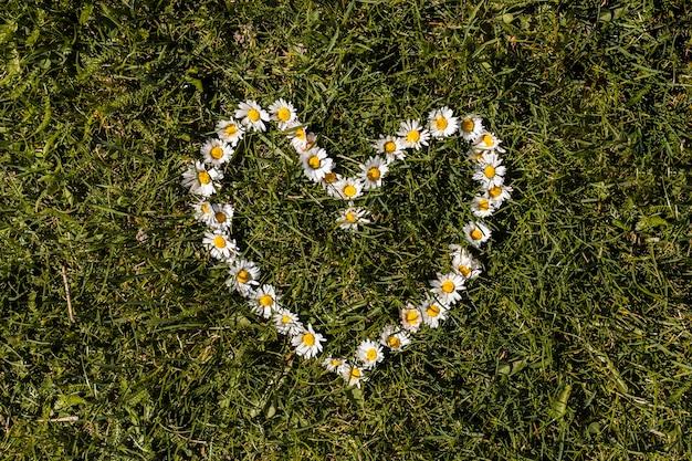 Blumen im freien Kostenlose Fotos