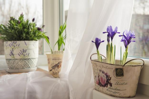 Blumen in einem topf auf der fensterbank Premium Fotos