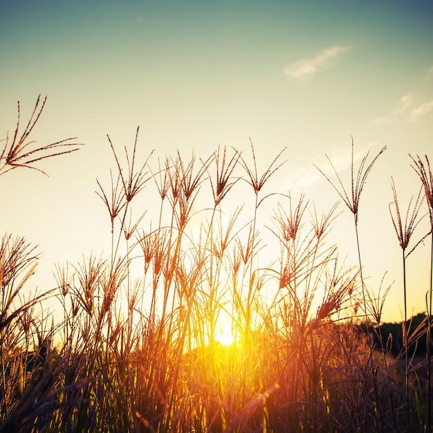 Blumen und pflanzen im sonnenuntergang Premium Fotos