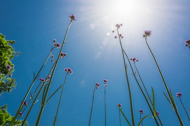 Blumen Kostenlose Fotos