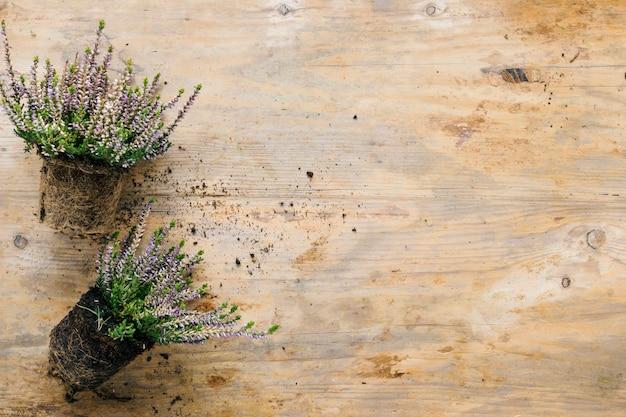 Blumenanlage mit boden auf holztisch Kostenlose Fotos
