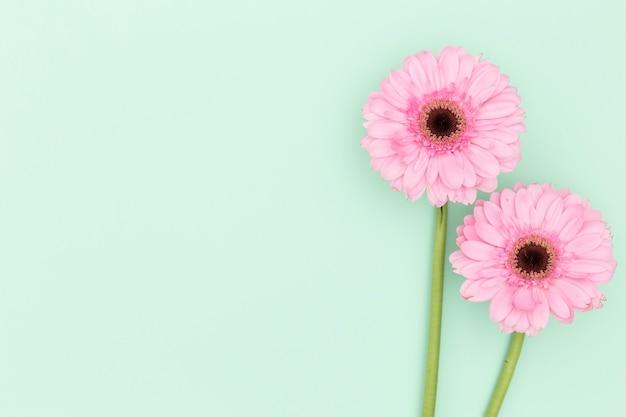 Blumenansicht der draufsicht mit grünem hintergrund Kostenlose Fotos