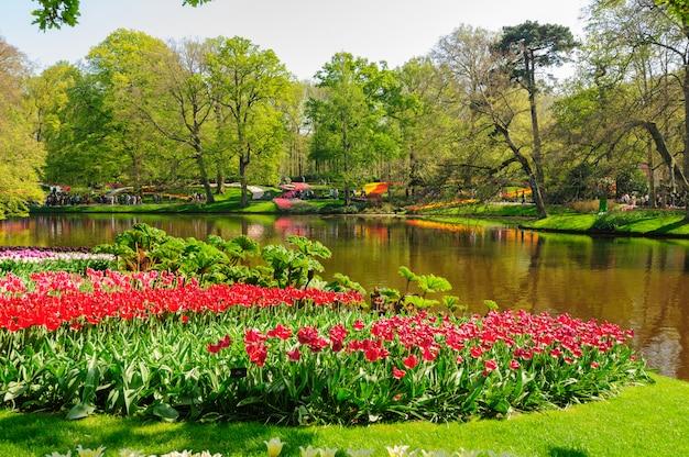 Blumenbeete von keukenhof-gärten in lisse, die niederlande Premium Fotos