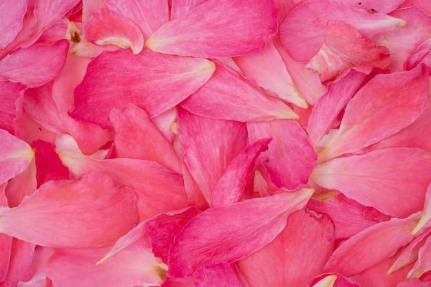 Blumenblattdetail von stieg für hintergrund Premium Fotos