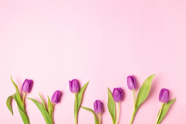 Blumenebene der gelben und violetten tulpen lag auf rosa Premium Fotos