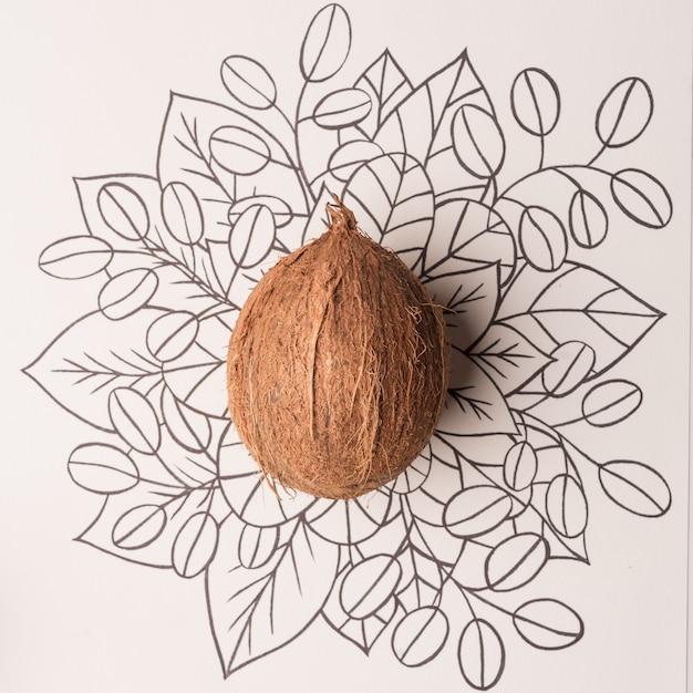 Blumenhand der kokosnussfruchtkontur gezeichnet Kostenlose Fotos