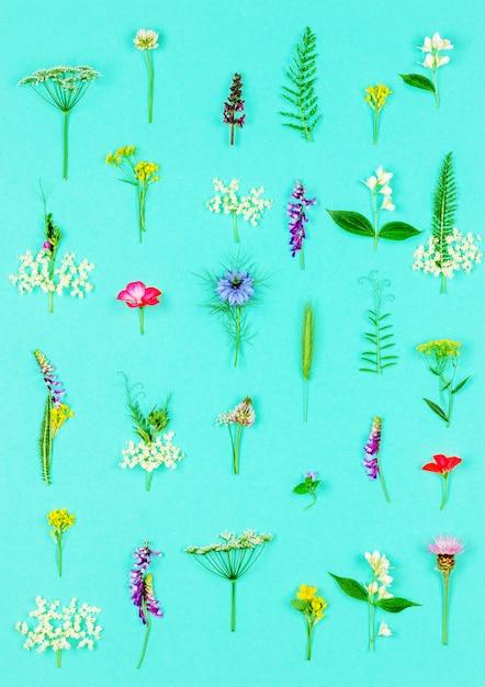 Blumenmuster gemacht von den wilden heilenden blumen und von den kräutern auf minze Premium Fotos