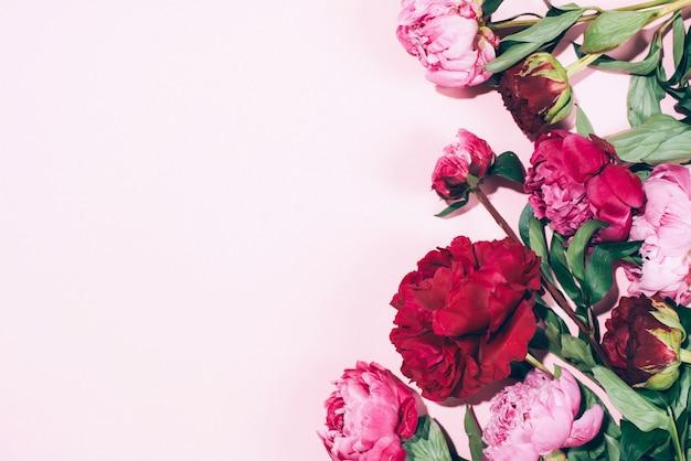 Blumenrahmen. rosa pfingstrosen mit hartem schatten auf pastellhintergrund Premium Fotos