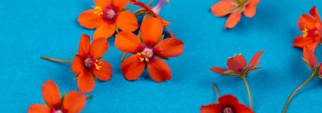 Blumensommerfahne, blauer hintergrund mit kleinen orange blumen Premium Fotos