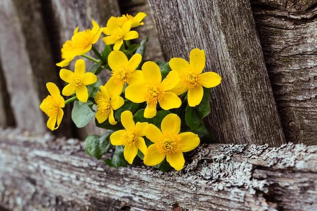 Blumenstrauß der frühlingsblumen schließen oben auf einem alten holzzaun. selektiver fokus mit geringer schärfentiefe Premium Fotos
