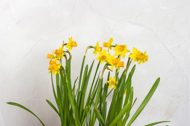 Blumenstrauß der gelben narzissen auf einem hintergrund der weißen steinmauer. konzept des urlaubs und des frühlingsanfangs. Premium Fotos