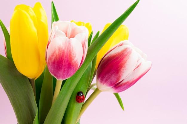 Blumenstrauß von gelben und rosa tulpen mit dekorativem marienkäfer Premium Fotos