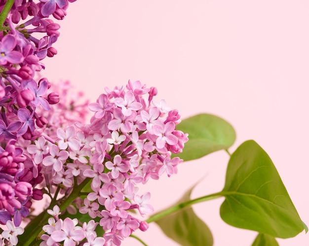Blumenstrauß von lila und rosa flieder auf einem rosa hintergrund, makro Premium Fotos