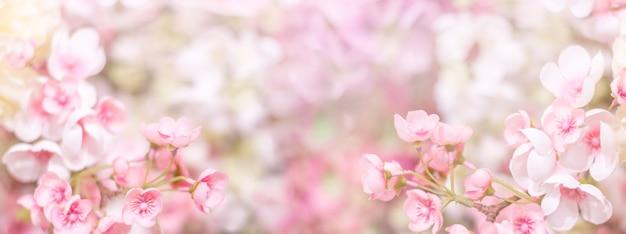 Blumiger hintergrund. zarte rosa blüten Premium Fotos
