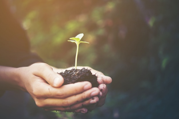 Boden grüne landwirtschaft kleinen hintergrund Kostenlose Fotos