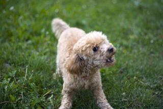 Böser hund, mutt Kostenlose Fotos