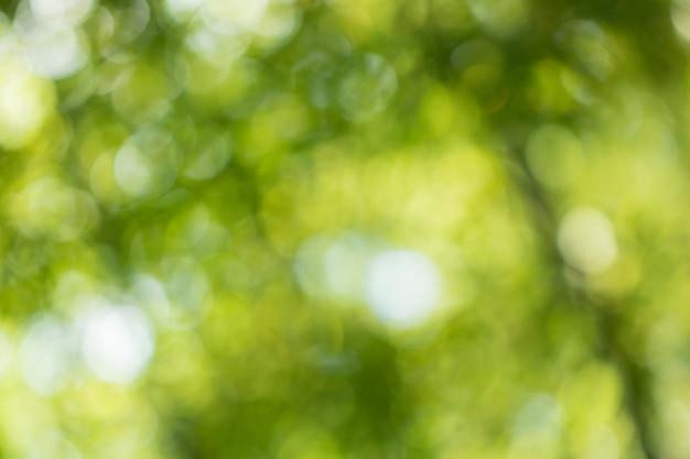 Bokeh von baum-blättern für naturhintergrund und speichern grünes konzept Premium Fotos