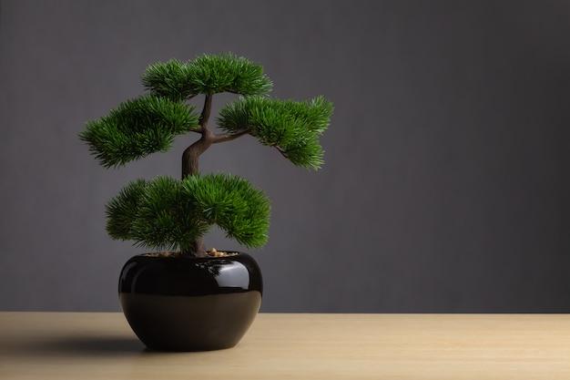 Bonsai auf dem schreibtisch. der hintergrund ist ein dunkelgrauer hintergrund. Premium Fotos