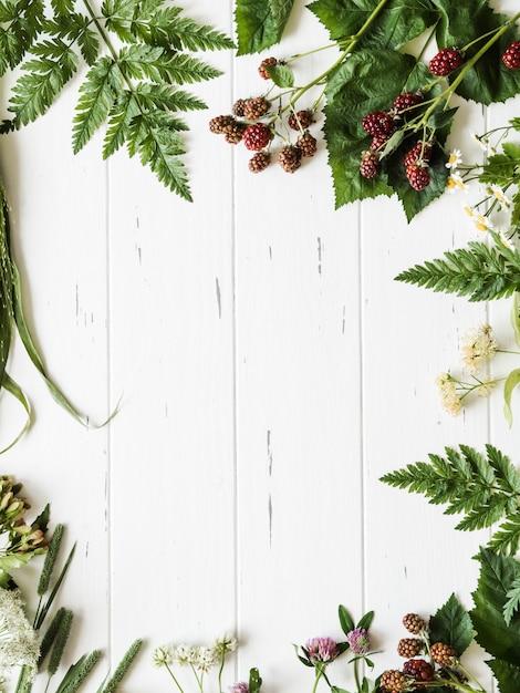 Botanischer rahmen der brombeere, kamille, lindenblume, klee auf hölzernem hintergrund. flache lagezusammensetzung von den frischen wilden kräutern und von den blumen auf draufsicht des rustikalen weißen hintergrundes Premium Fotos