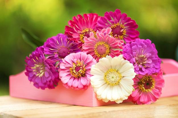 Bouquet von rosa, lila, weißen zinnien auf grün Premium Fotos