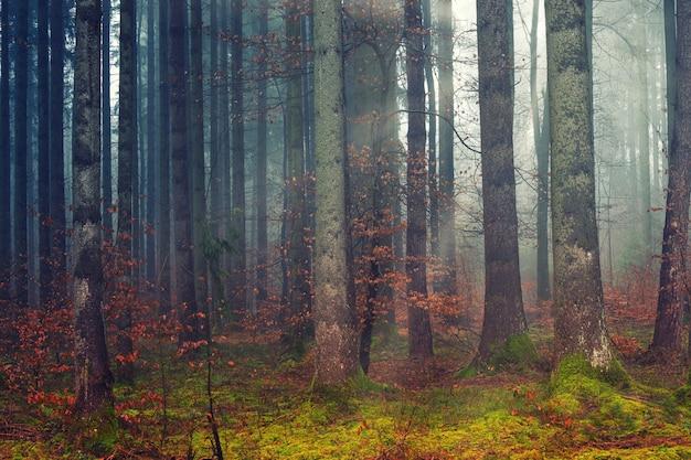 Braune bäume auf grüner wiese Kostenlose Fotos