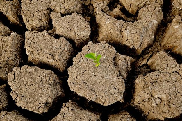 Braune bodenoberfläche ist rissig und grüne bäume, die von trocken kommen. konzept der globalen erwärmung. rissige erdstruktur. Premium Fotos