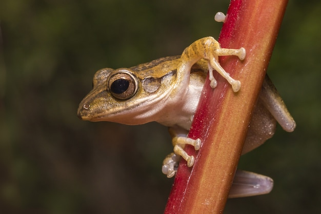 Brauner frosch auf holzzaun nah oben Kostenlose Fotos