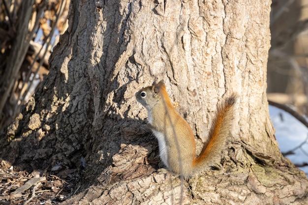 Braunes eichhörnchen, das auf einem baum steht Kostenlose Fotos