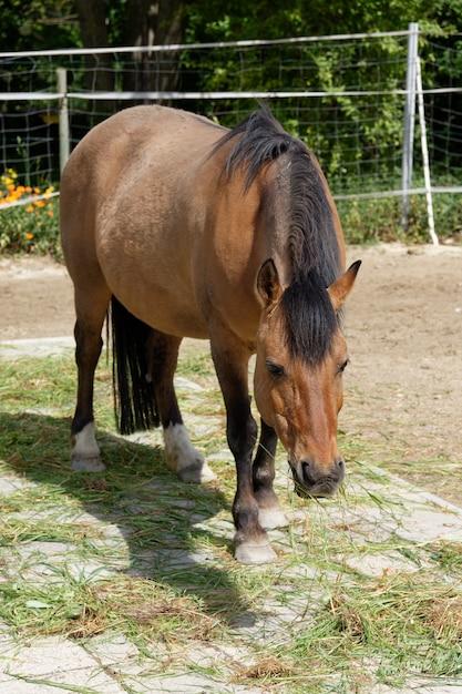 Braunes pferd, das auf der weide in einer farm weidet Kostenlose Fotos