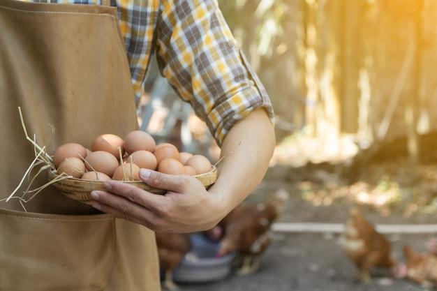 Braunes schutzblech der jungen intelligenten landwirtabnutzungs-plaid-langen hülse hemd halten frische hühnereien in korb Premium Fotos