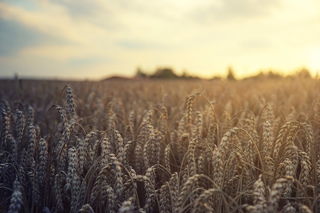 Braunes weizenfeld während des tages Kostenlose Fotos