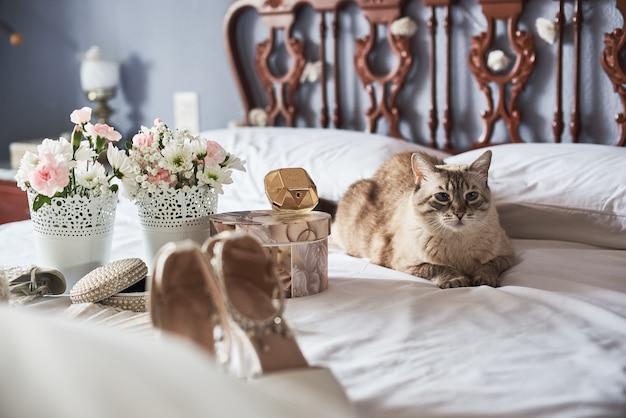 Brautschuhe, parfüm, blumen, schmuck und katze der stilvollen weißen hochzeit auf einem bett. Premium Fotos