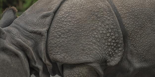 Breite nahaufnahme eines nashorns mit einer unschärfe Kostenlose Fotos