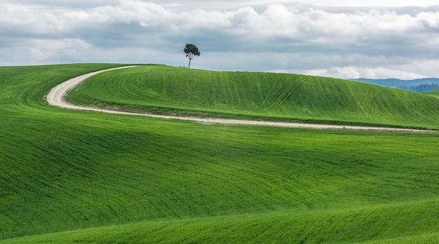 Breiter schuss eines isolierten grünen baumes nahe einem weg in einem schönen grünen feld Kostenlose Fotos