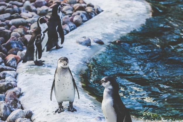 Breiter selektiver fokusschuss von weißen und braunen pinguinen in der nähe von wasser Kostenlose Fotos