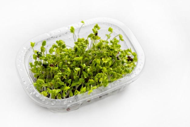 Brokkolisprossen aus eigenem anbau - quelle von myrosinase-enzym und sulforaphan als antikrebs-behandlung Premium Fotos