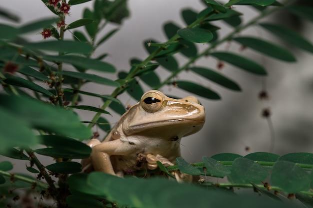 Brown-baumfrosch auf dem baum Premium Fotos