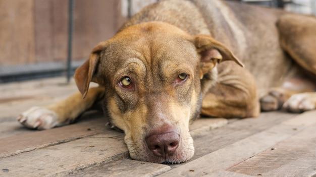 Brown-hund, der auf einem balkon wartet auf seinen chef sitzt. Premium Fotos
