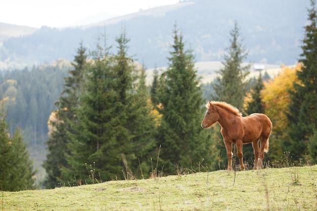 Brown-pferd, das auf dem rasen auf einem hintergrund von bergen weiden lässt Premium Fotos