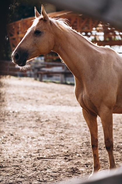Brown-pferd in ranch Kostenlose Fotos