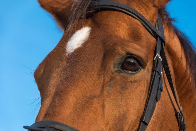 Bucht hintergrund bauernhof pferde im freien Kostenlose Fotos