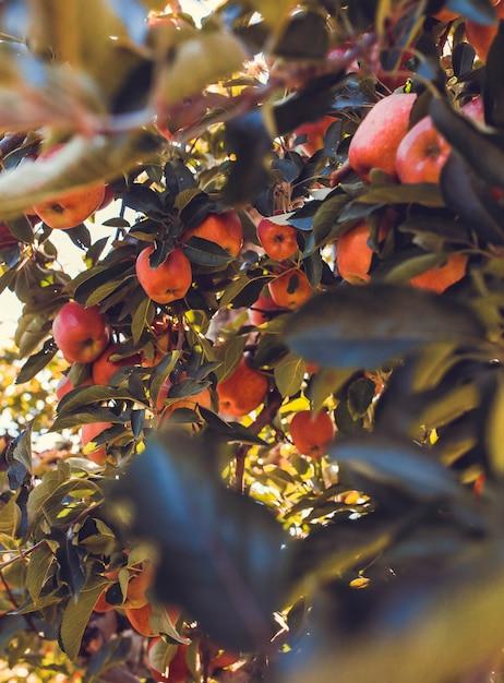 Bündel der ovalen rosa früchte schließen Kostenlose Fotos