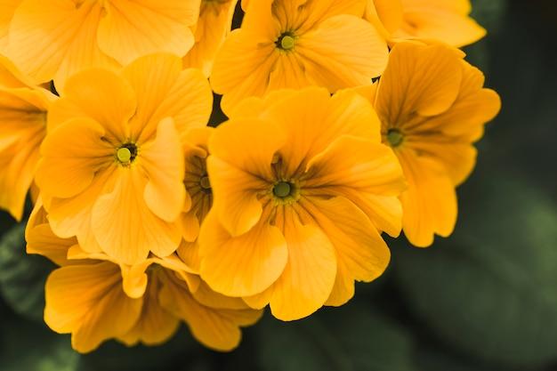 Bündel erstaunliche gelbe frische blumen Kostenlose Fotos