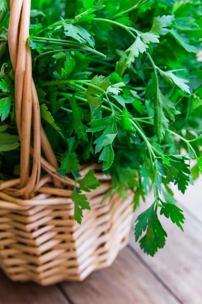 Bündel frische organische petersilie vom garten in einem weidenkorb Premium Fotos