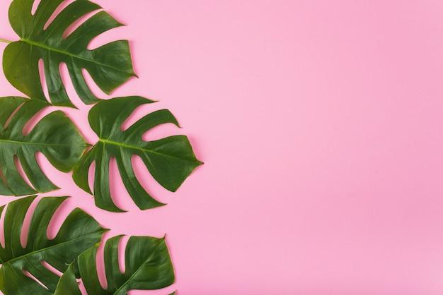 Bündel grünblätter auf rosa Kostenlose Fotos