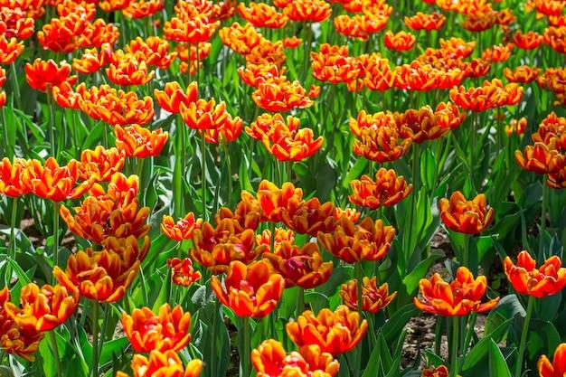 Bunte blumen, die in einem park blühen Premium Fotos