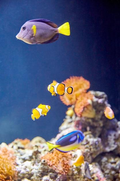 Informationen über Fische
