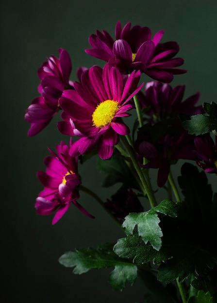 Bunte frühlingsblumen des hohen winkels Kostenlose Fotos