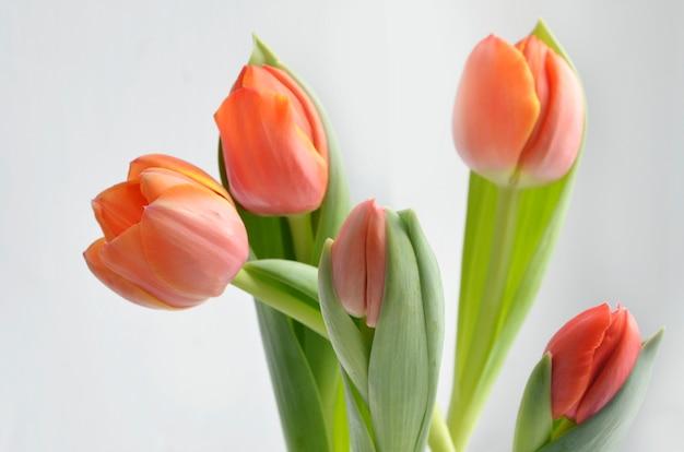 Bunte tulpe blüht hintergrund Premium Fotos
